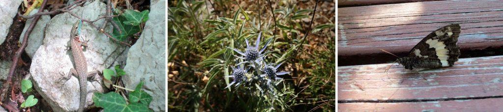 Eidechse Blumen Schmetterling